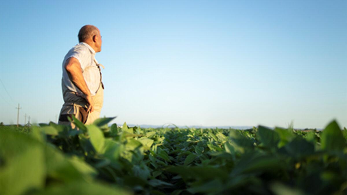 Conoce los cultivos más rentables